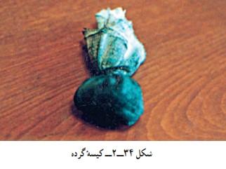 کیسه گرده در کارگاه قلمزنی صنایع دستی